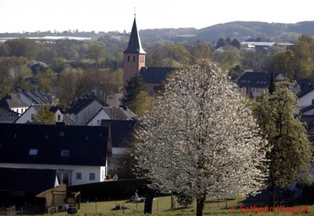 Oberbachem Kirchblüte